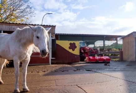 Horse farm- Grünig