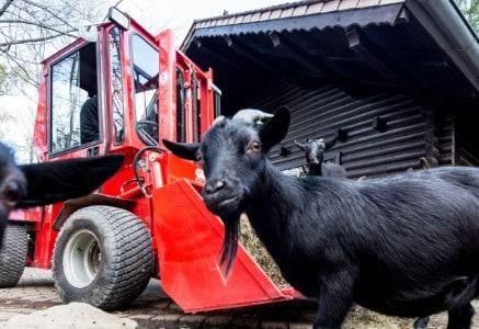 Tierpark und Landwirtschaft - Grünig